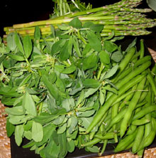 Ayurveda Plants